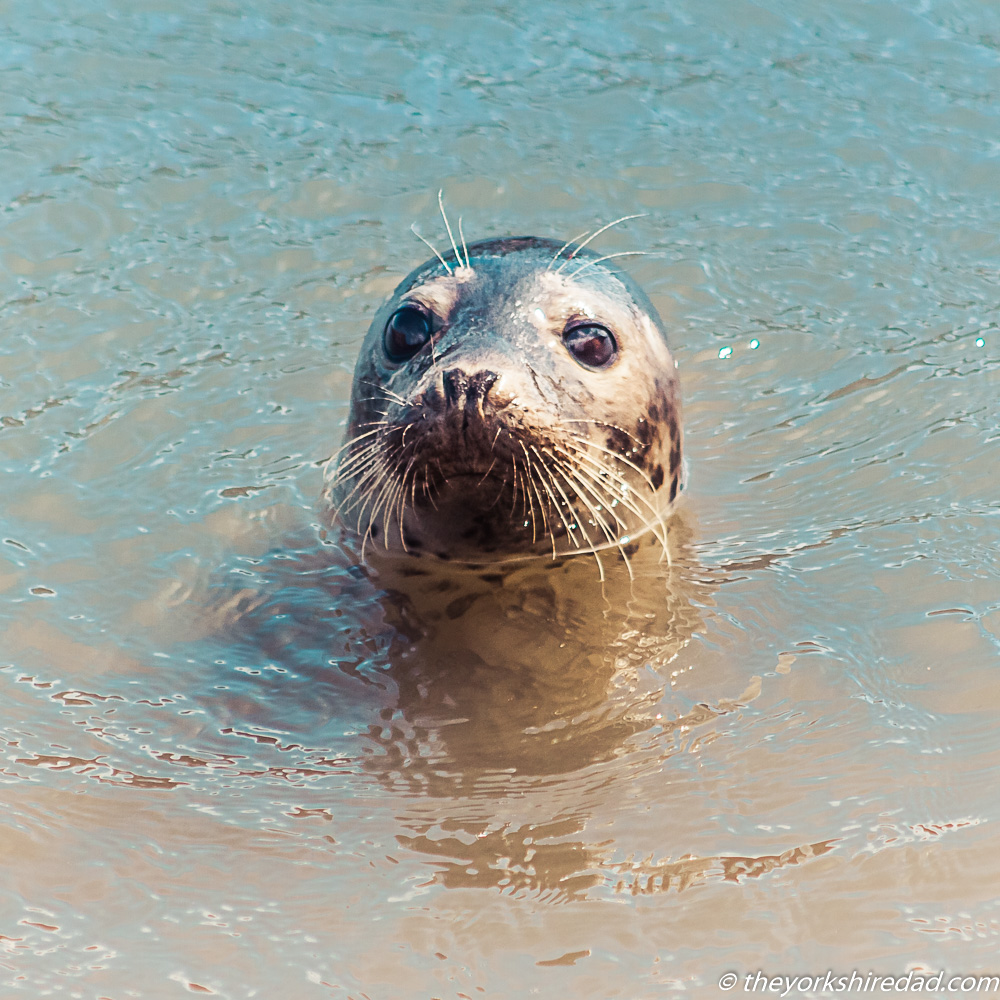 Seal in the water | The Yorkshire Dad of 4