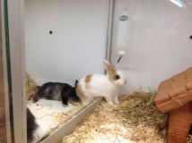 Cute bunnies!