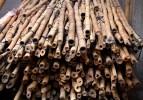 Hong Kong Lumber