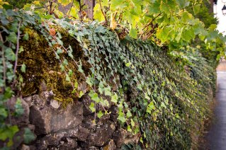 Some walls are so old, the vines are escaping.