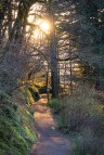 Multnomah Falls Trail