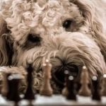 perro blanco con piezas de ajedrez negras
