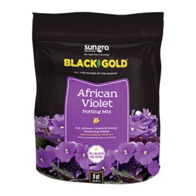 Black Gold African Violet
