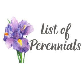 List of Perennials