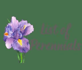 List of Perennials