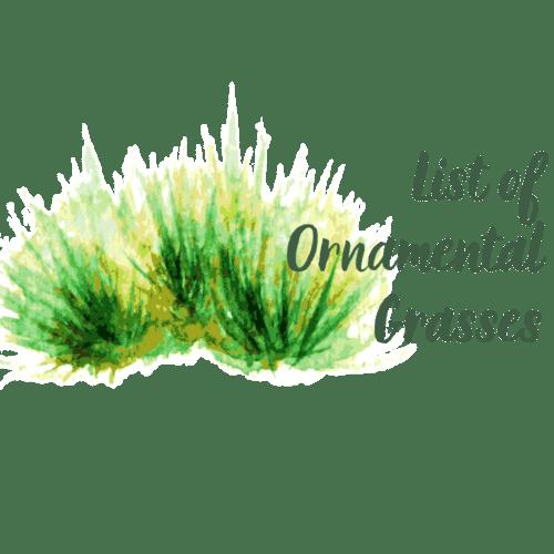 List of Ornamental Grass