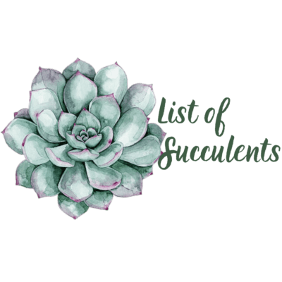 List of Succulents