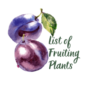 List of Fruiting Plants
