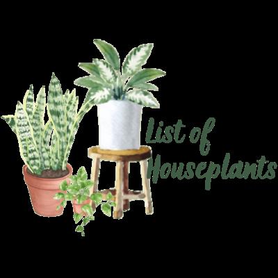 List of Houseplants