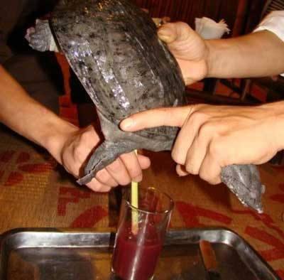 Món ăn Quán miết giáp - Rót nước vào mai Ba Ba
