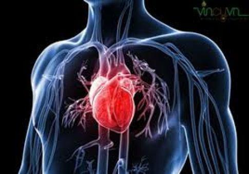 Công dụng của dầu oliu với tim mạch