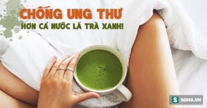 Công dụng của cây trà xanh làm giảm nguy cơ ung thư hiệu quả