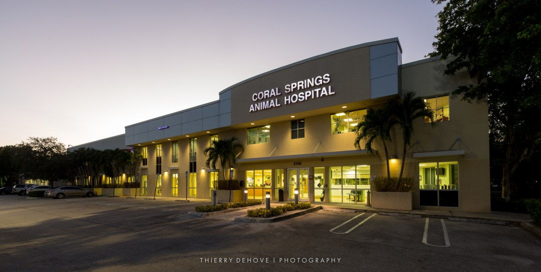 BEFORE: Coral Springs Animal Hospital
