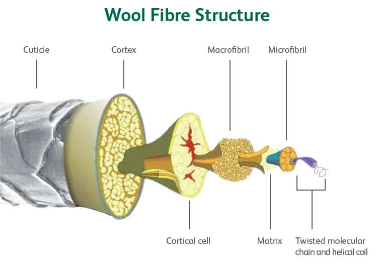 Wool fibre structure