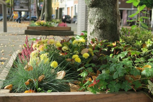 Fleurige boomspiegel