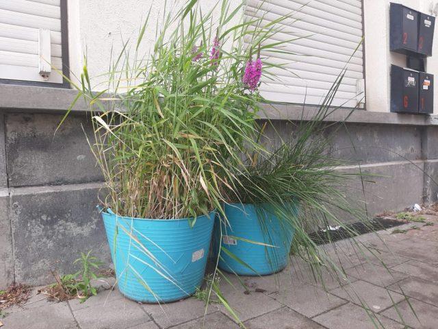 Plantenbakken met riet voor gevel