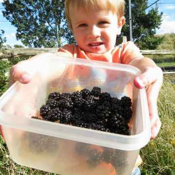 Blackberry Picking in the Fall