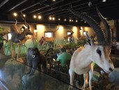 The restaurant, where you can eat surrounded by all kinds of dead animals.