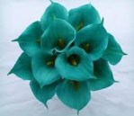 cropped-cropped-cropped-teal-flowers12.jpeg