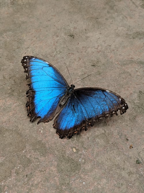 167 Things That Are Blue In Nature Thing Database
