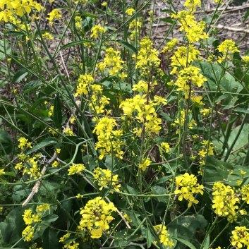 rendezvous-park-walking-trail-flowers