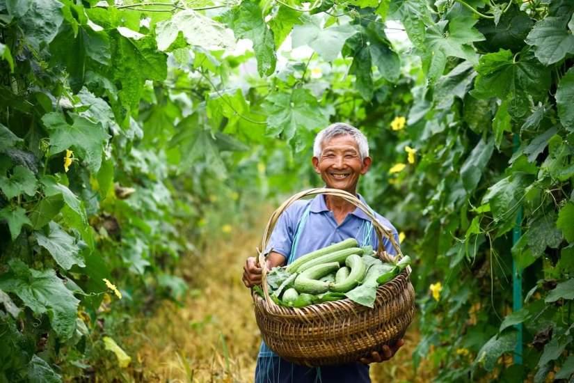 HEALTH BENEFITS OF SNAKE GOURD. Thingscouplesdo.com