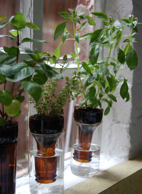 wine bottle herbs #thingsdeeloves 5