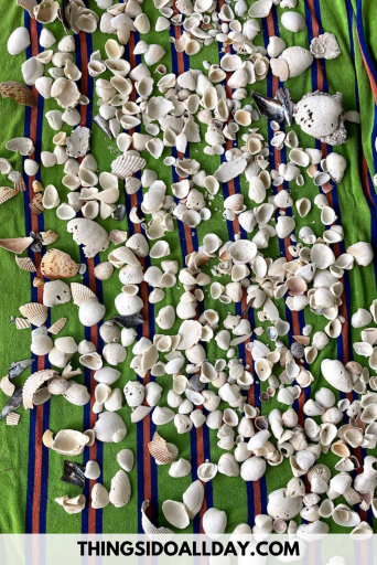 Seashells on a blanket from the beach getting ready for seashell art and crafts