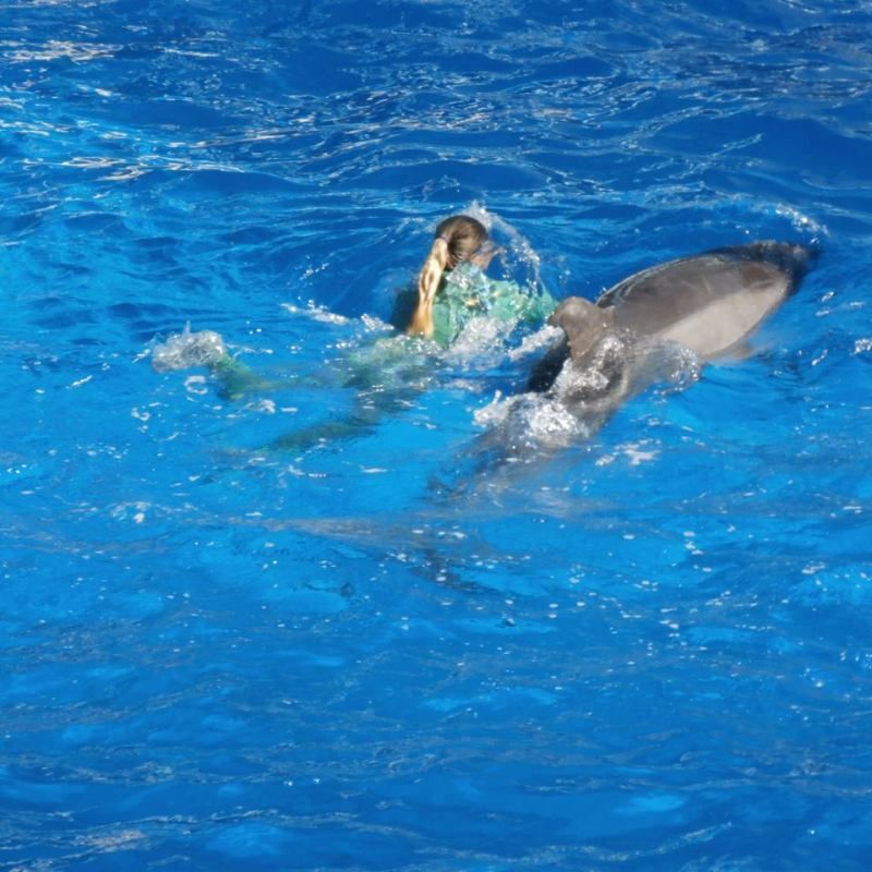Sea World Dolpin Show