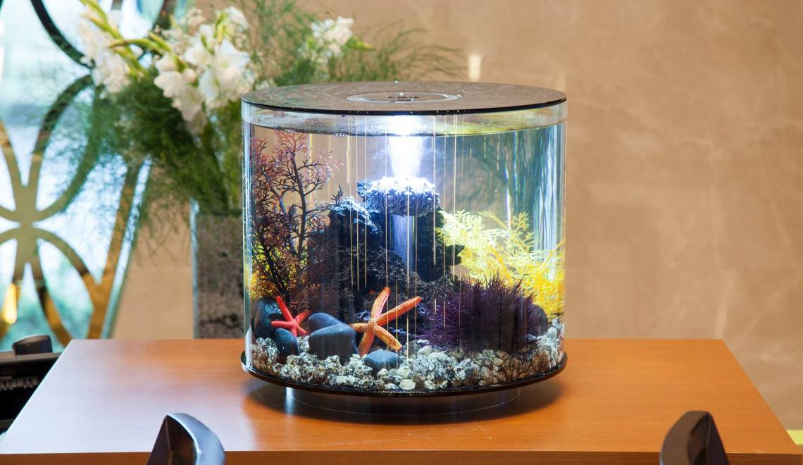 Aquariums for a Small Space