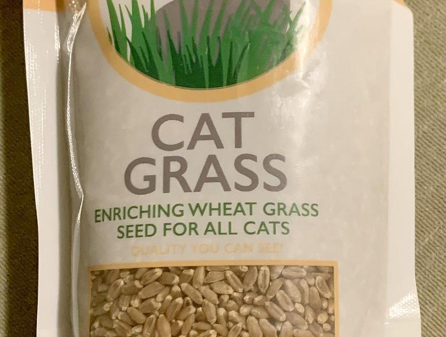 A Very Special Treat For Your Cat