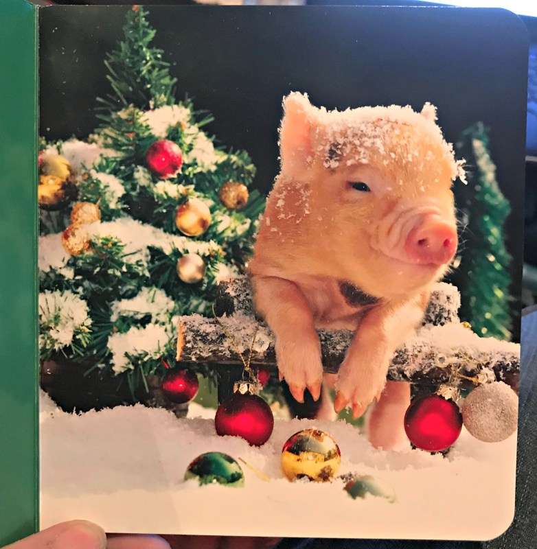 The Sweetest Piggy Book Ever