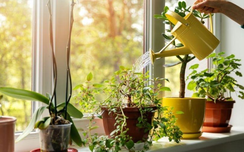 Top Tips for Aspiring Plant Parents