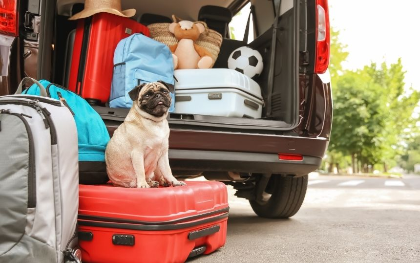 Reasons To Go on Vacation With Your Dog
