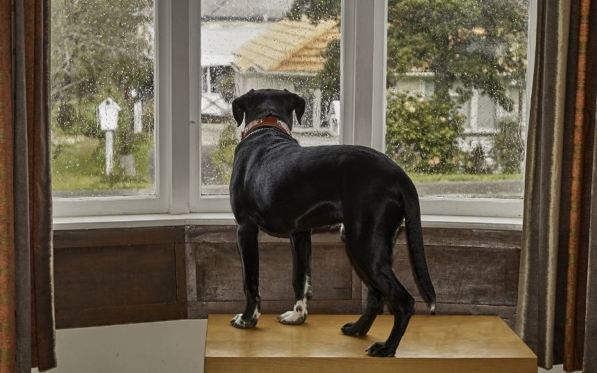 How You Can Help a Dog With Separation Anxiety