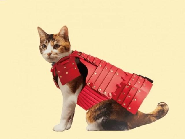 Samurai Armor for Pets
