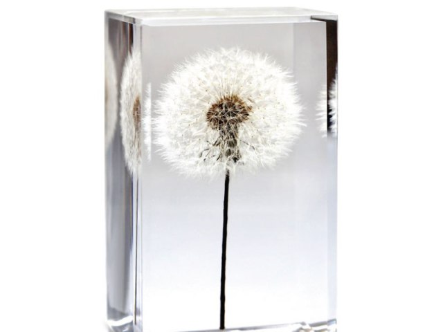 Dandelion Paperweight Cube