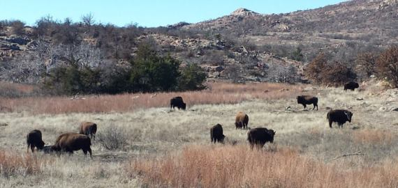 Oklahoma Wichita Mountain Refuge