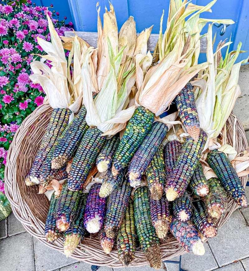 Decorative corn on the cobs from Kurbisegge Pratteln