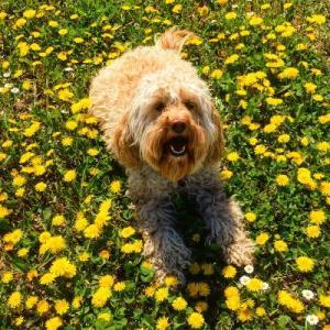 best dog walks in geneva