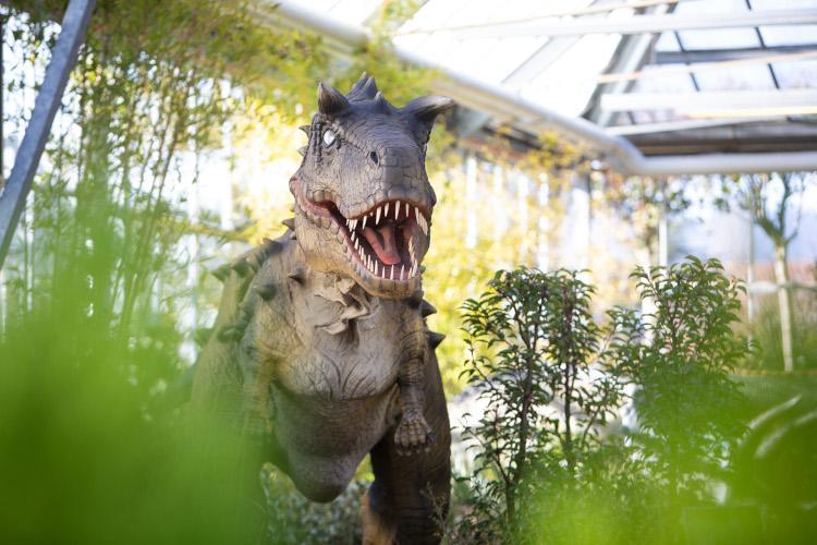 Schilliger Dinosaurs