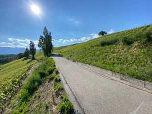 scenic bike route and vineyards - geneva