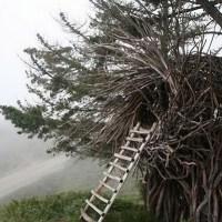Jayson Fann's Spirit Nests