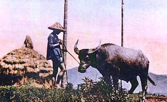 地震的由來:你知道「地牛翻身」是臺灣本土創生的地動傳說嗎?