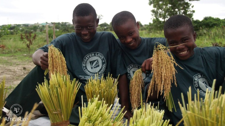 african rice - pic1
