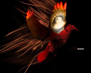 Evil Dove