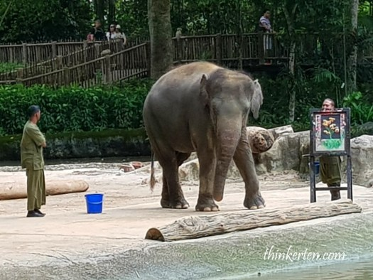 Elephants show Singapore Zoo