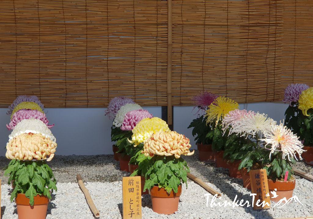 """Himeji Castle aka the """"White Herorn Castle"""" - The most beautiful castle in Japan"""