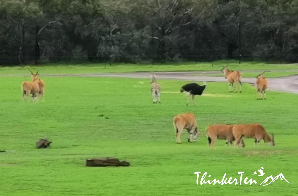A Taste of African Savannah in Werribee Open Range Zoo, Melbourne Australia