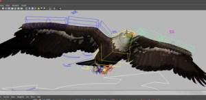 Bald Eagle Rig